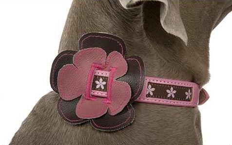 Flower Slide-on Dog Collar