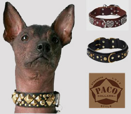 paco designer collars for dogs